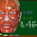お顔の筋肉・表情筋【3D解剖学】